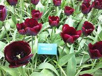 jouZELF in bloei tegenkomen