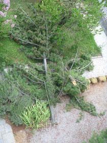 il pino spaccato