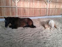 Hier schlafen die Pferde auf Späne