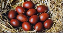 Les œufs de LA MARANS