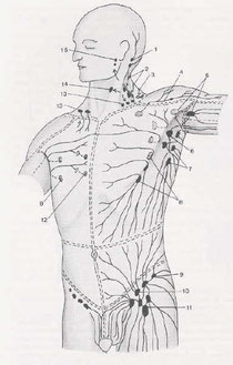 Lymphdrainage - Physio-Mindl