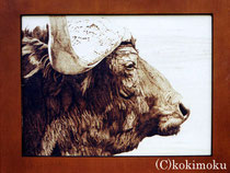 African Buffalo (wood burning)