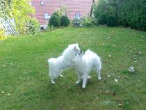 Avaro und Bailey 7 Monate alt