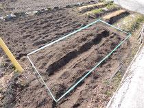 トウモロコシ植え付け