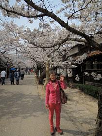 がいせん桜の桜並木のトンネル