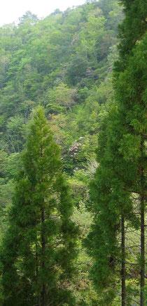 木々の間からほんの少し、顔を覗かせてます。。。