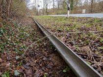"""Der """"Dauerkrötenzaun"""" an der Arensburg, der den alljährlichen Aufbau überflüssig macht. - Foto: Kathy Büscher"""