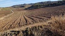 Die Weinreben von Rioja