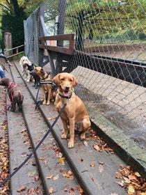 Training im Tierpark in Olderdissen