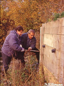 Entfernen der Holzverkleidung einer Eisvogel-Nistwand im LSG Storchengraben