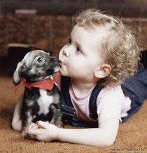 собака и реьёнок. Это неопасно? питомник голд беби