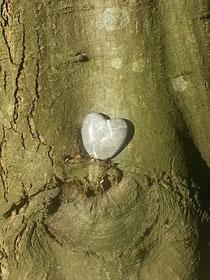 Der Sören - Baum im Juni 2014