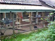 Eines der zwei Aussengehege. Natürlich mit Zugang in das Katzenhaus.