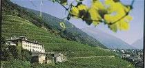ヴァルテリーネの葡萄畑