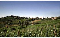 広大なオルトレポ・パヴェーゼの葡萄畑