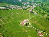 モスカート・ディ・スカンツォの畑