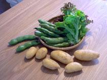 畑から直接収穫させていただいた野菜