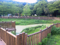 紫金山公園