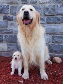Wrigley & Max