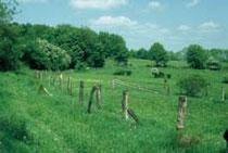 Das extensive Grünland auf dem Hahnberg wird durch zahlreiche Hecken und Einzelsträucher belebt.