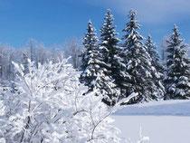 Три долгих зимних месяца: снежный декабрь, морозный солнечный январь и сердитый метелями февраль. Зимняя природа погружена в сладкий сон, надежно укрывшись под белым покрывалом пушистого снега.