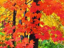 Осень красивое время года. Листочки на деревьях желтеют и лес одевается в яркие желто-красные наряды. Все чаще звенит дождик и начинает холодать, а в самом конце осени может пойти настоящий зимний снег.