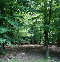 Wald - Lainzer Tiergarten