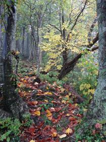 落葉いっぱいの登山道。秋を感じます。