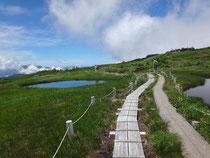 苗場山頂部の広い湿原、たくさんの池塘。