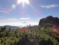 朝日を浴び快晴の塩見岳頂上と富士山