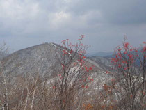 浄法寺山から見た南丈競山