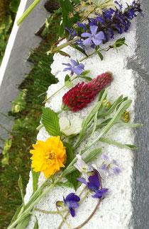 春夏の手作り酵素 5月下旬 花だけで20種類