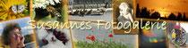 http://susannes-fotogalerie.jimdo.com/