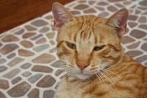 7 Eine halb schlafende Katze aus Griechenland/A half sleeping cat from greece
