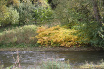146 Die Ahr im Herbst/The Ahr in autumn