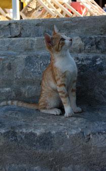 84 Eine kleine Katze/A little cat
