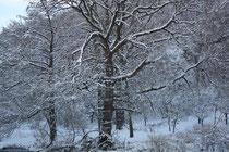 5 Ein Baum/A tree