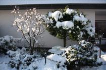 48 Baum/Tree