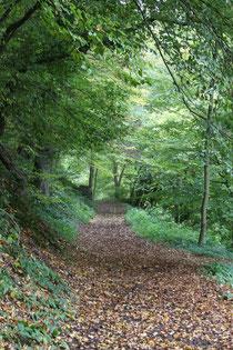 21 Waldweg/Forest track