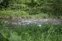 100 Fluss die Ahr/River Ahr