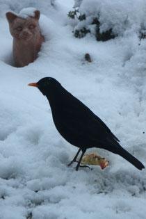 119 Amsel und Katze/Blackbird an cat