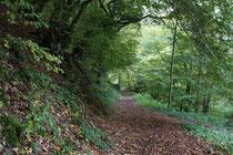 23 Waldweg/Forest track