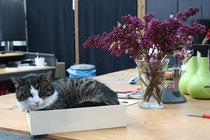 27 Katze in einer Kiste/Cat in a box