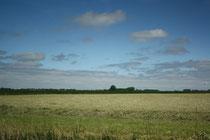 6 Landschaft/Landscape