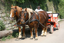 1 Pferdekutsche/Horse-drawn carriage