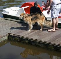 12 Hund an einem Seg/Dog at a dock