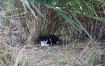 88 Katze auf einer Wiese/Cat on a meadow