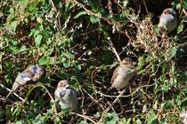 12 Vögel bei der Pause/Birds at the break