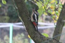 110 Der Specht/The woodpecker