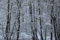 12 Bäume/Trees